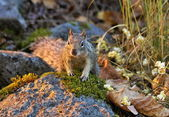 Squirrel on stone — Stock Photo