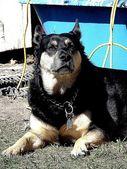 Dog in the sun — Stock Photo