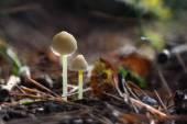 Small toadstools — Stock Photo