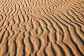 Dunes at sunrise landscape — 图库照片