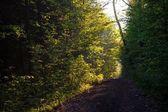 Caminho na floresta — Fotografia Stock