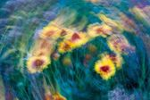 Long exposure abstraction of flowers — Stock Photo