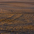 Plowed field landscape — Stock Photo #67922539