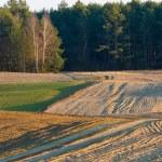 Plowed field landscape — Stock Photo #67923255