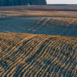 Plowed field landscape — Stock Photo #67923453