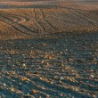 Plowed field landscape — Stock Photo #67924429