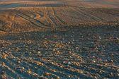 Plowed field landscape — Stock Photo