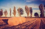 Vintage landscape of straw bales on stubble field — Stock Photo