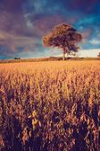 Vintage photo of corn field landscape — Stock Photo