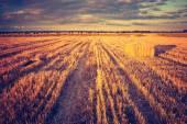 Vintage photo of stubble field — Stockfoto
