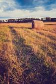 Vintage photo of stubble field — Stock Photo