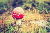 Vintage photo of red toadstool — Stock Photo