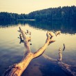 Vintage lake sunset with old dead tree trunk — Stock Photo #68245707