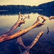 Vintage lake sunset with old dead tree trunk — Stock Photo #68245867