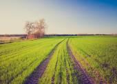 緑の穀物のフィールドのビンテージ写真 — ストック写真