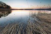 Lake landscape with reeds — Stock Photo