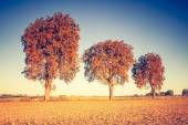 Vintage photo of autumn trees on field. — Foto Stock