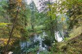 Wild river in autumnal colorful forest — Stock Photo
