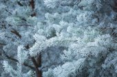 Frosted tree branches — Stock Photo