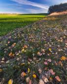 Autumn withered grassland with fallen leaves. — Stock Photo