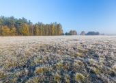 Beautiful morning with frost on plants. Autumnal landscape. — Stock Photo