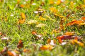Autumnal leaves on green grass — Stock Photo