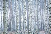 Frozen birch forest — Stock Photo