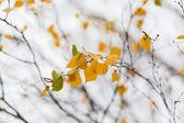 Autumn colorful leaves — Stock Photo