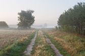 Mglisty poranek krajobraz — Zdjęcie stockowe