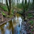 Small river in springtime forest — Stock Photo #69648399