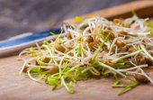 Fresh lentil and wheat sprouts on cutting board.  — Stock Photo
