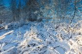 Landscape with plants under snow — Stock Photo