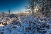 Landscape with plants under snow — Stock Photo