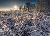 Amanecer de invierno hermosa — Foto de Stock