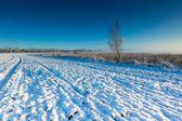 Beautiful winter field landscape. — Fotografia Stock