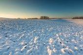 Beautiful winter field landscape. — Stock Photo