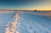 Beautiful winter field landscape. — Foto de Stock
