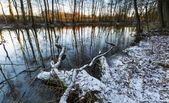 Winter forest with wild river — Stock Photo