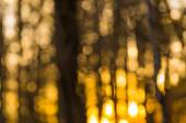Beautiful  lights in forest — Stock Photo