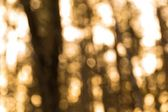 Forest blurred background — Stock Photo