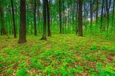 Beautiful green springtime forest — Stock Photo