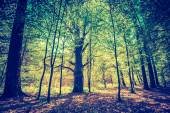 Green springtime forest — Stock Photo