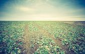 Cultivated land in early spring — Stock Photo