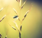 Green fly sitting on grass — Stock Photo