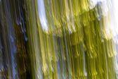 Su fondo astratto confuso della foresta di estate — Foto Stock