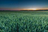 Beautiful sunset over green field — Stock Photo