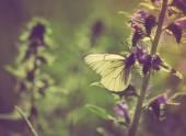 Butterfly zittend op plant. — Stockfoto