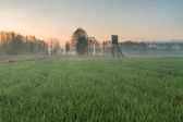 Field with raised hide — Stock Photo