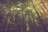 Green summer forest — Stock Photo