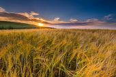 Beautiful landscape of sunset over corn field at summer — Stock Photo